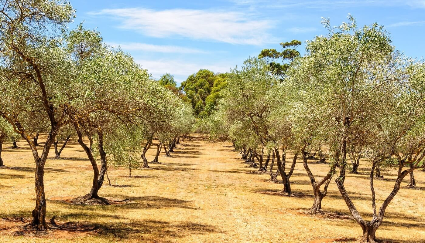 Sustainable Food & New Innovations You Need to Know About